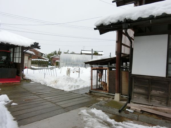 2014.12.7 花鈴1
