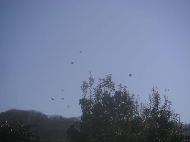 bird_bird_01.jpg