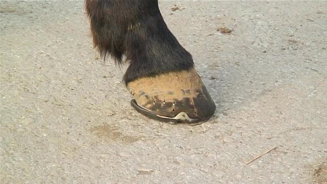 howtocareforyourhorses hooves.WidePlayer