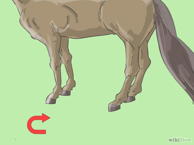 670px-Teach-Your-Horse-to-Piaffe-Step-2.jpg