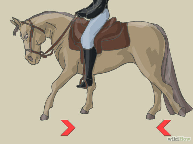 670px-Teach-Your-Horse-to-Piaffe-Step-3.jpg