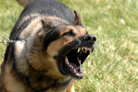 Military_dog_barking.jpg