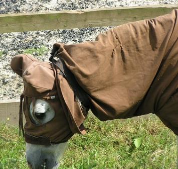 ewok-pony-a.jpg