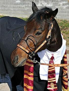 harry-potter-horse.jpg