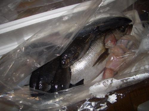 鮮魚山盛り