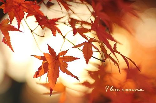 IMG_2013_12_03_9999_49紅葉