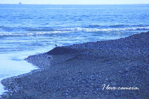 IMG_2013_12_16_9999_8海岸