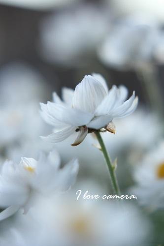 花かんざし5