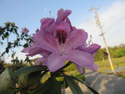 2013_0514_180340-IMG_8287.jpg