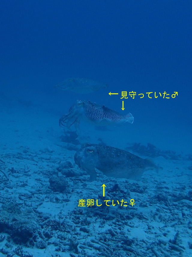 2013_02200013b.jpg
