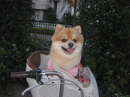 13きいちゃん 自転車 1205