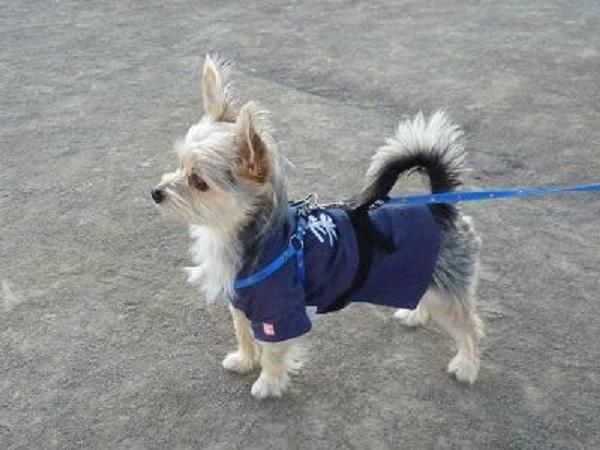 4犬道 待て 20121107