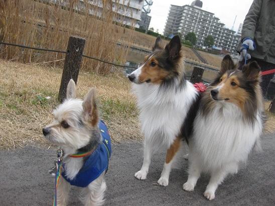 9・双頭の犬と6 1226