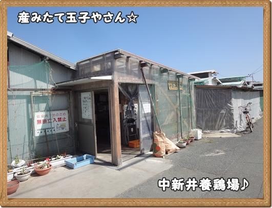 DSC03355.jpg