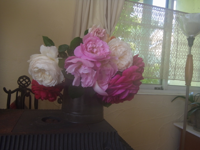 薔薇園でプレゼントしていただいた薔薇