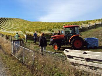 ピノ2012年収穫の様子
