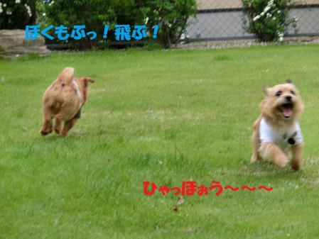ぶっ!飛び