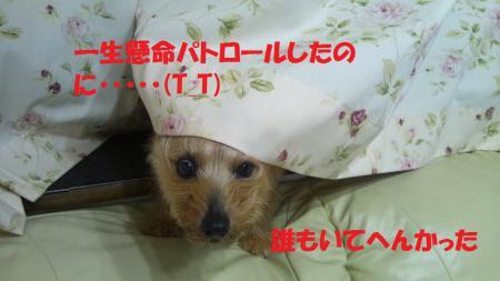 DSC_0115_20120607153957.jpg