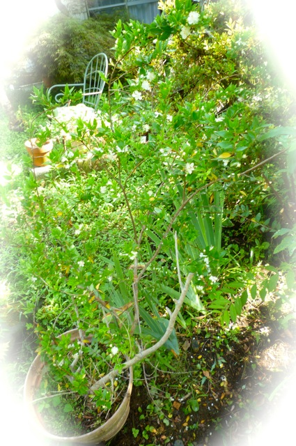 7月の庭1