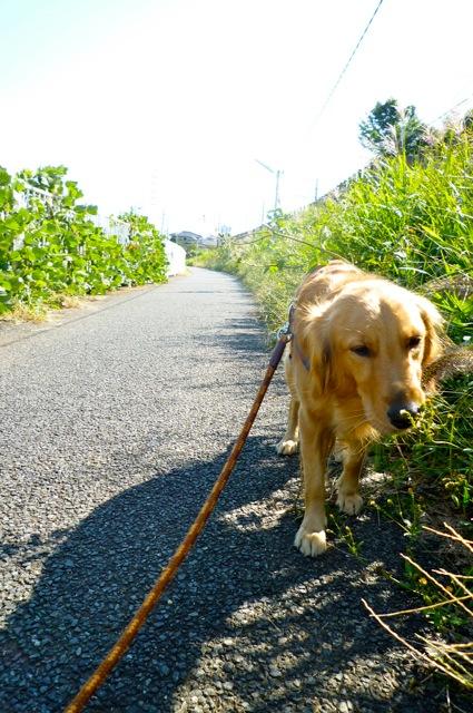 ジャンヌ散歩