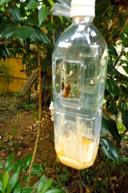 スズメバチ退治1
