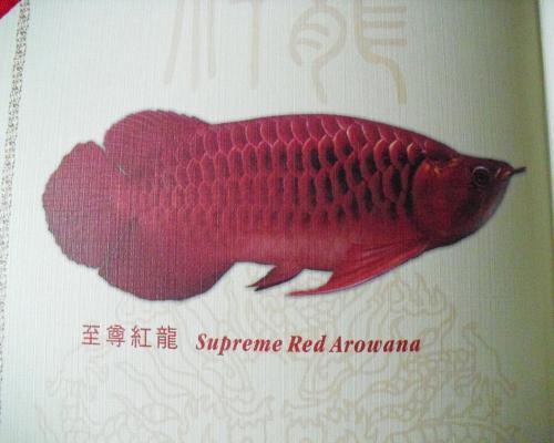 紅龍イメージ