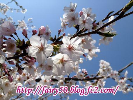IMG_0508.jpg