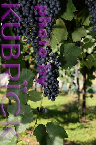 2012_0926_BQ03.jpg