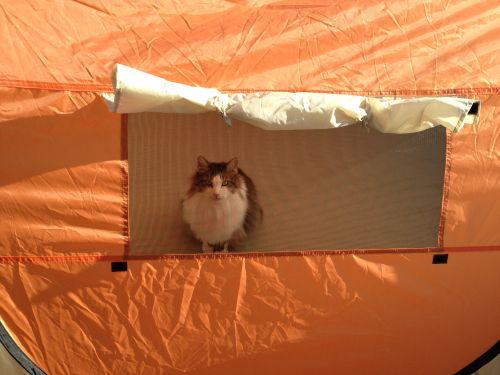 テント02写真