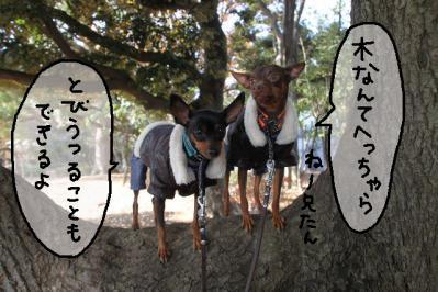 2012_11_24_9999_109.jpg