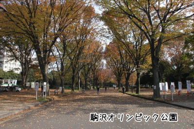 2012_11_24_9999_124.jpg