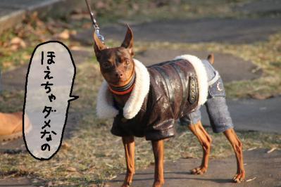 2012_11_24_9999_158.jpg
