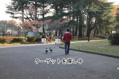 2012_11_24_9999_166.jpg