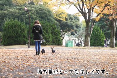 2012_11_24_9999_21.jpg