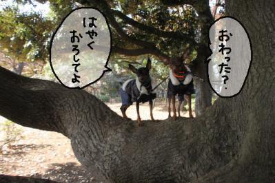 2012_11_24_9999_78.jpg