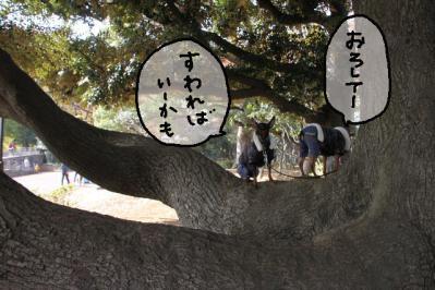 2012_11_24_9999_94.jpg