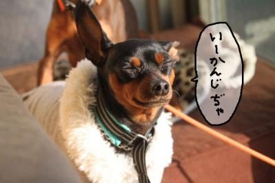 2012_12_08_9999_11.jpg