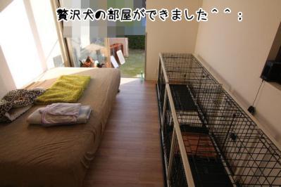 2012_12_08_9999_3.jpg