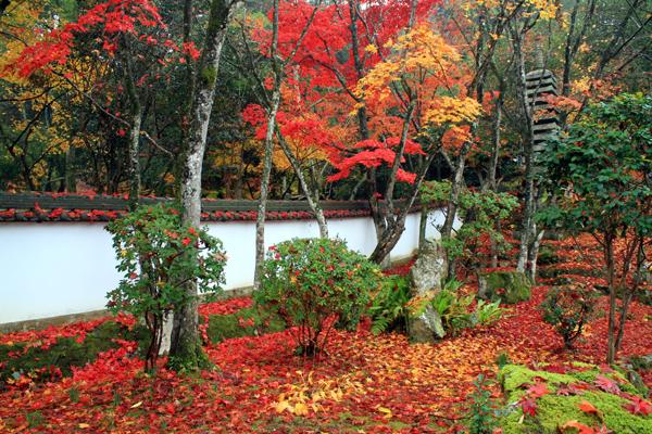 西林寺の庭ともみじ