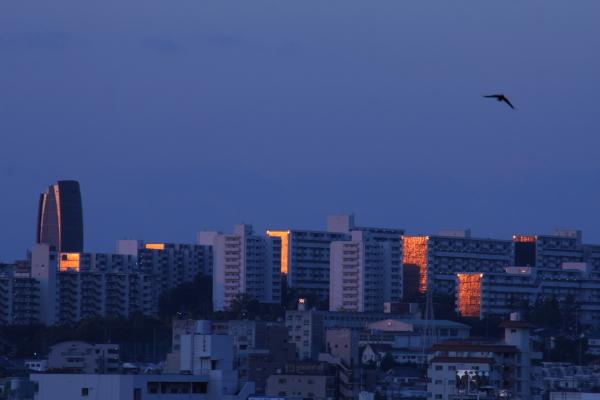 141099-dawn-02.jpg