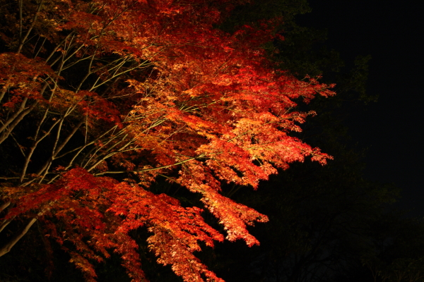 141122-higashi-01.jpg
