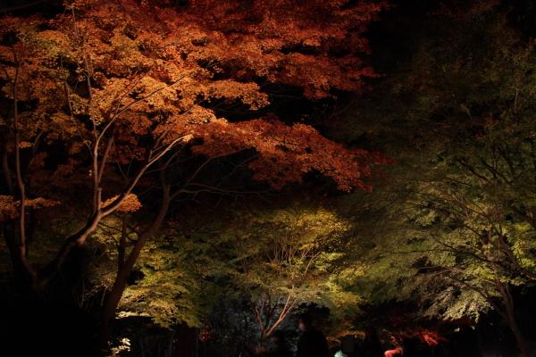 141122-higashi-04.jpg