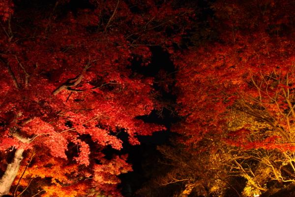 141122-higashi-09.jpg