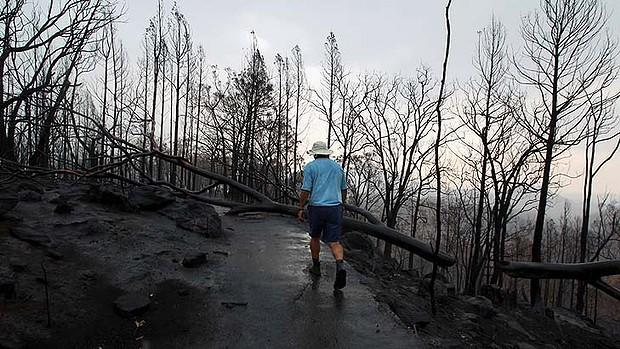 黒焦げの木、灰と荒廃のワランバングル国立公園オーバーレイほぼ消失