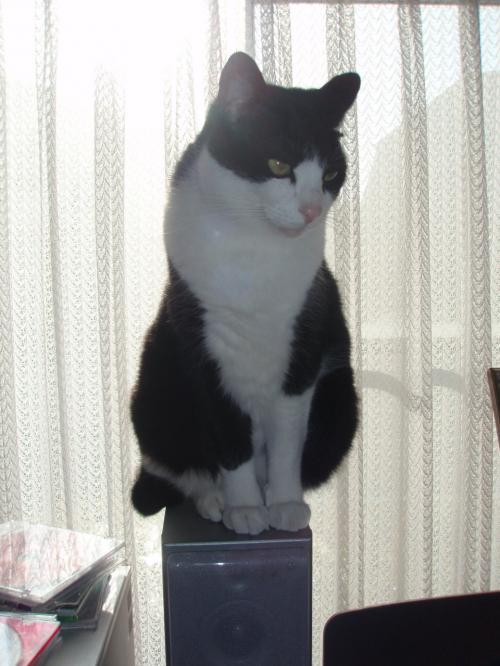 全く猫らしいお座り