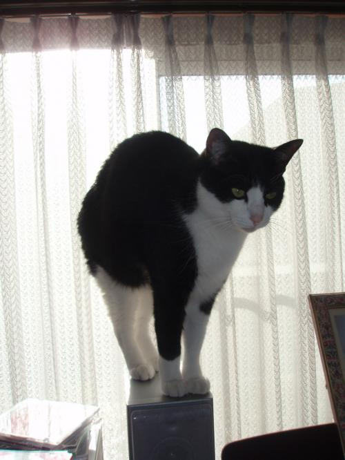 かなり猫らしいポーズ