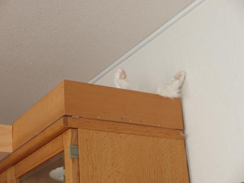 ハンドメイドの猫タワー