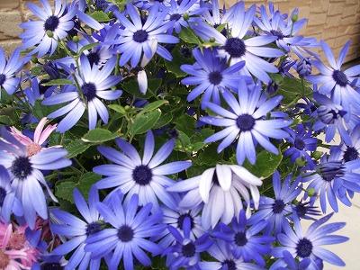s-早春の花①