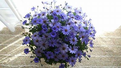s-薄紫の花①