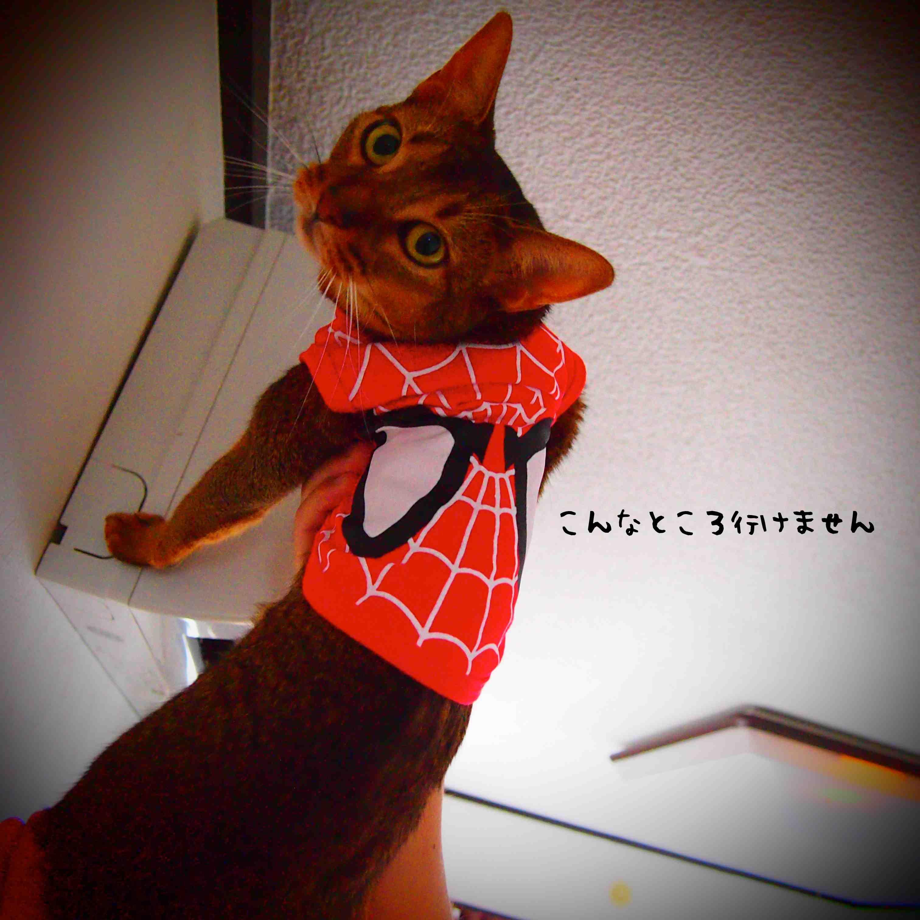 別猫です。